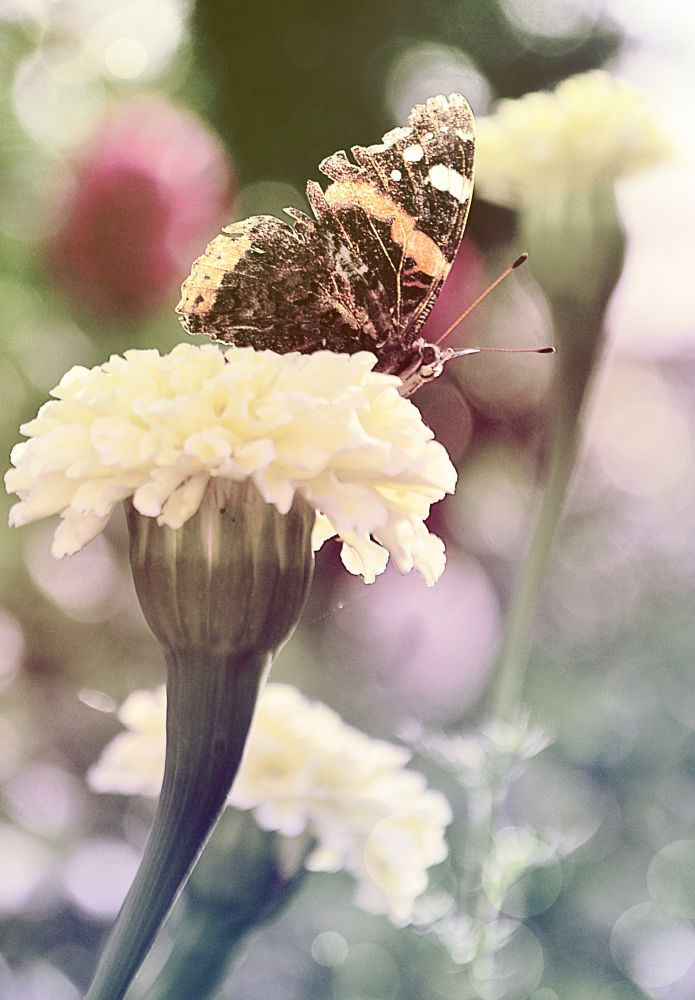 Photo in Nature #nature #spring #butterfly #flower #hot #delicate #ingarden