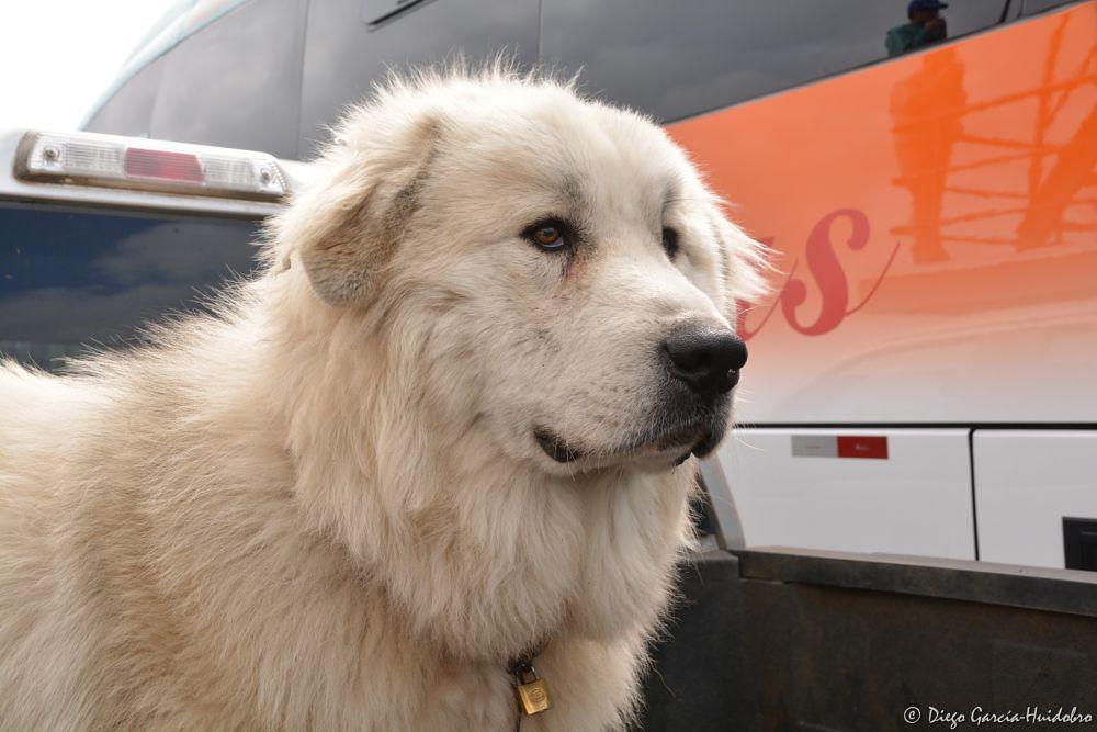 Photo in Portrait #dog #friend #animal
