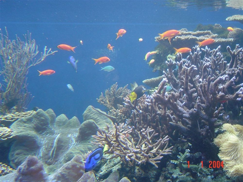 Photo in Random #hawaii #fish