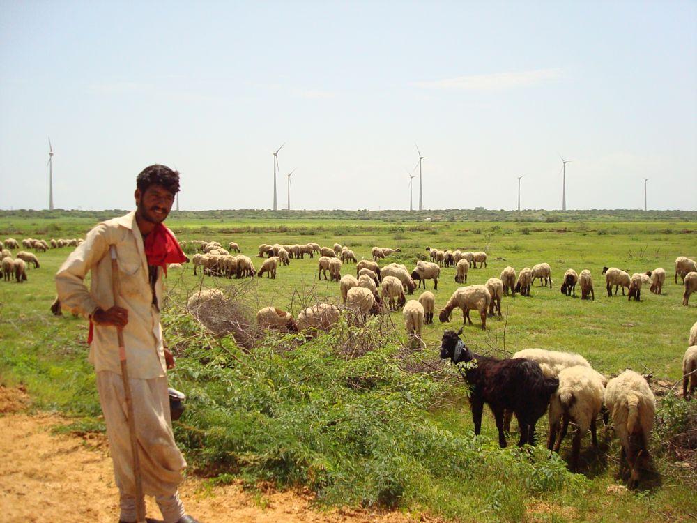 Photo in Animal #sheeps #farmer #goats