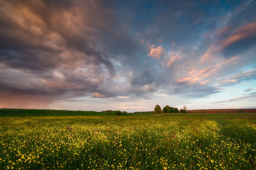 Photo in Landscape #wildflowers #meadow #outdoor #poland #podlasie #mood #sky #clouds #colours #storm