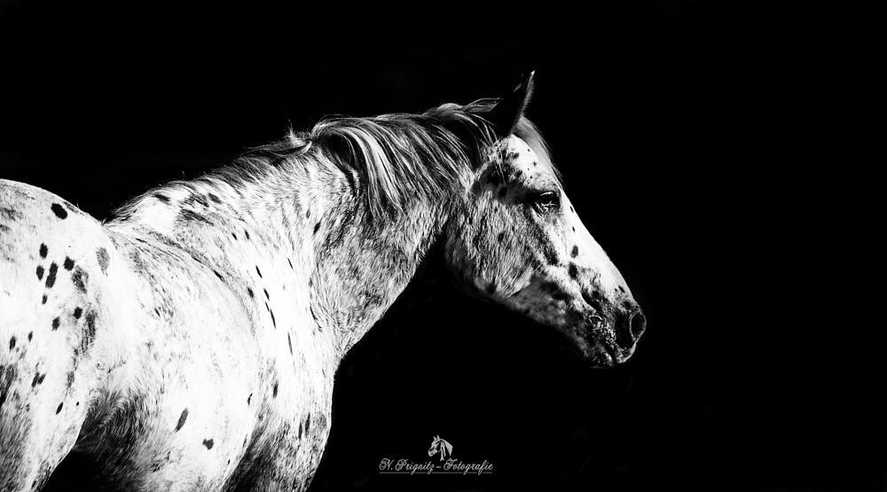 Photo in Animal #horse #pferd #riding