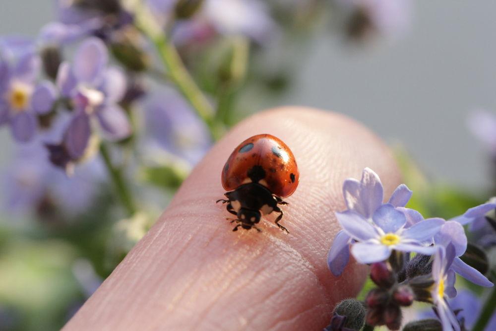 Photo in Macro #macro #ladybug