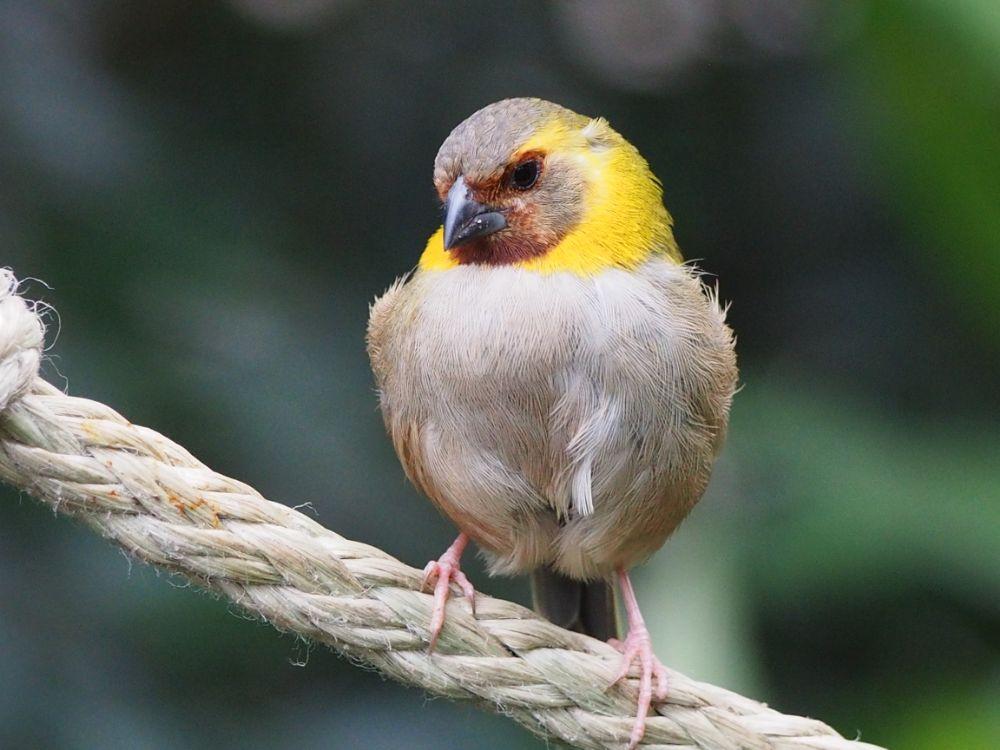Photo in Animal #bird #rope