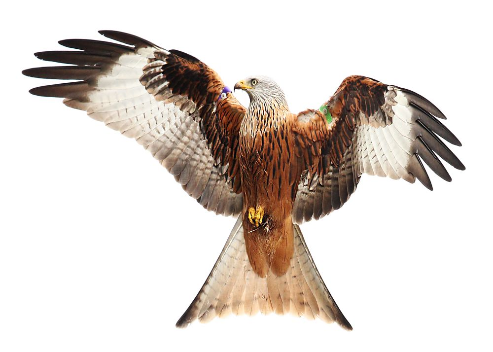 Photo in Nature #bird of prey #eat #fly