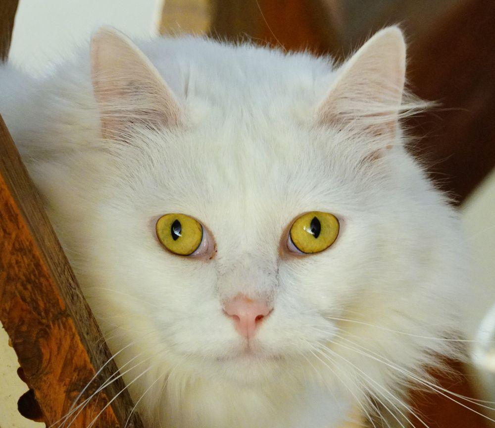 Photo in Animal #animal #cat