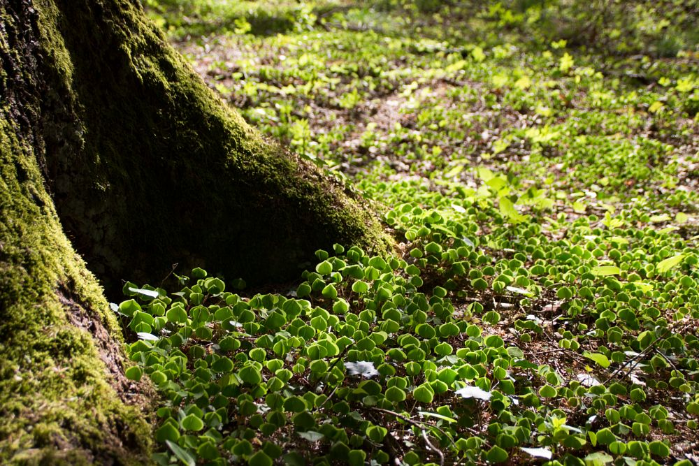Photo in Nature #green #leaf #leaves #spring #wood #woods