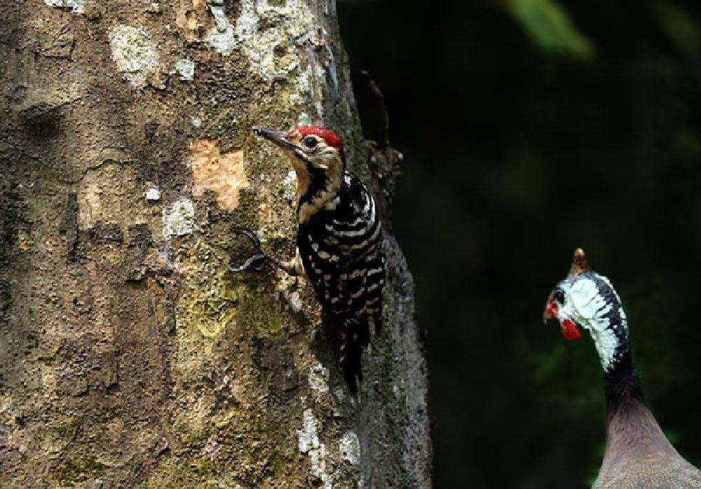 Photo in Nature #bird #wild #nature #bangladesh