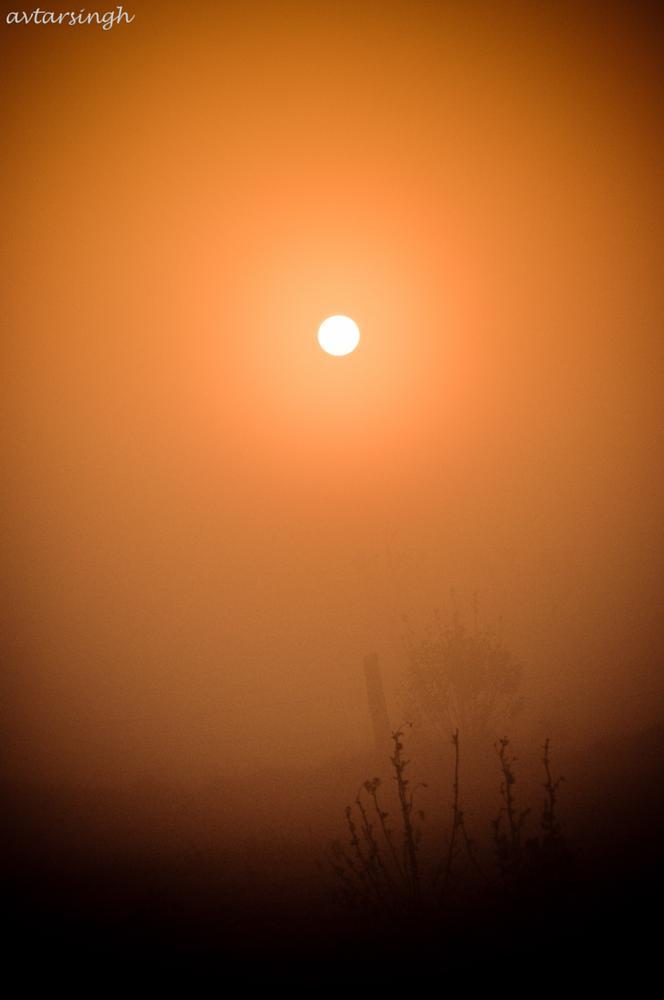 Photo in Nature #sun #misty #trees #nature