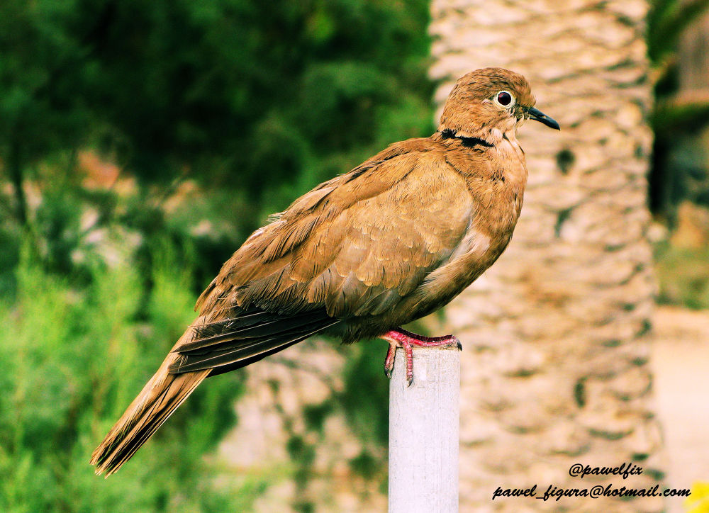 Photo in Animal #bird #salerno #italy #pawel #sun