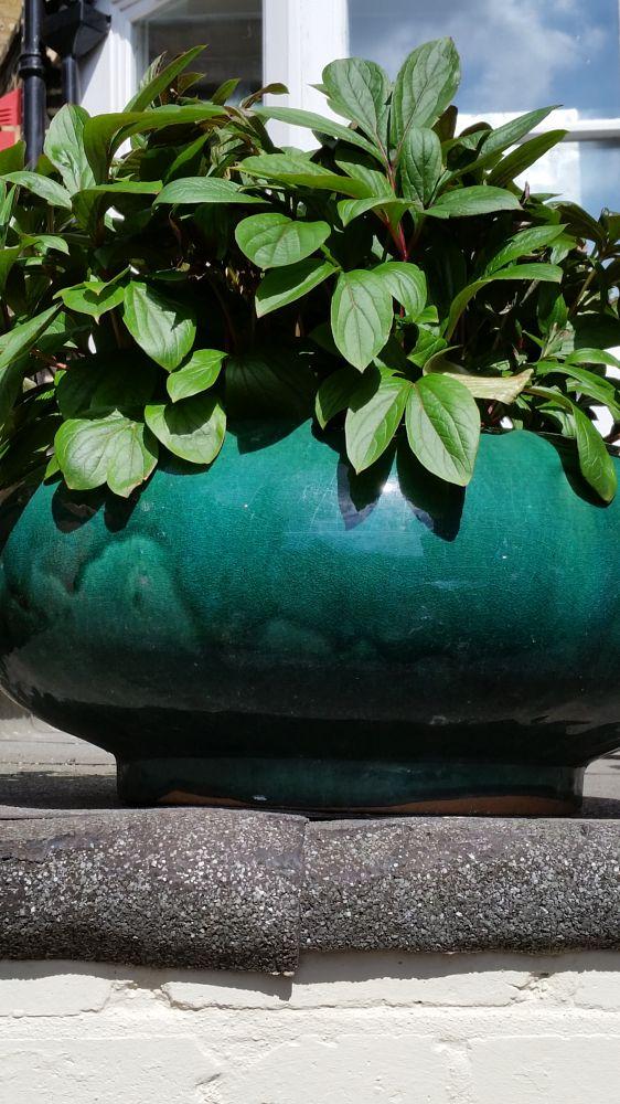 Photo in Random #green pot #reyhan luttman