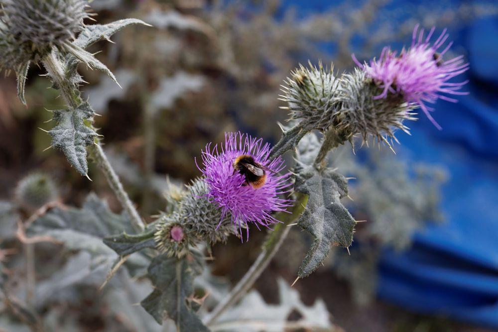 Photo in Macro #animal #flower #macro #close up