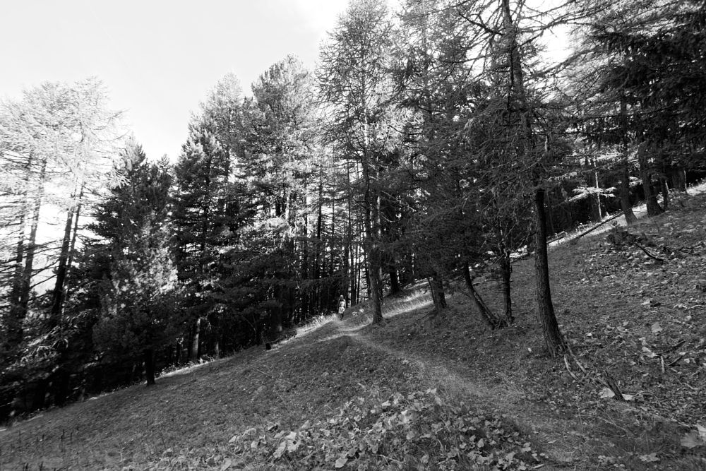Photo in Black and White #forest #family #path #walk