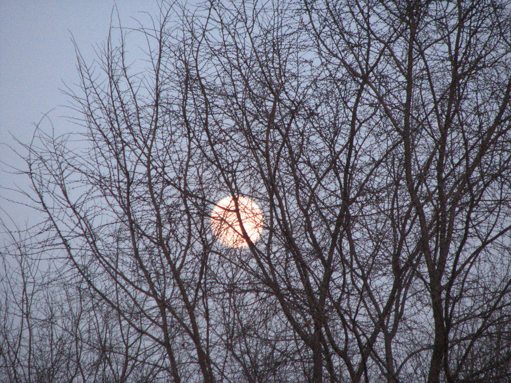 Photo in Nature #moon tree