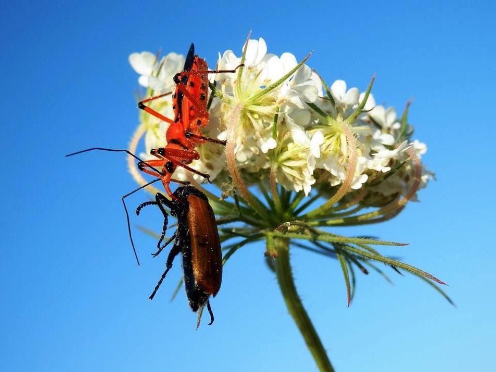 Photo in Random #doğa #nature #naturel #macro #makro #kelebek #arı #çiçek #bahar #spring #summer #winter #bee #yaz #kış #mevsim #eğitim #böcek #a #manzara #ağaç #three #i̇nsan #çi̇çek #hayvan