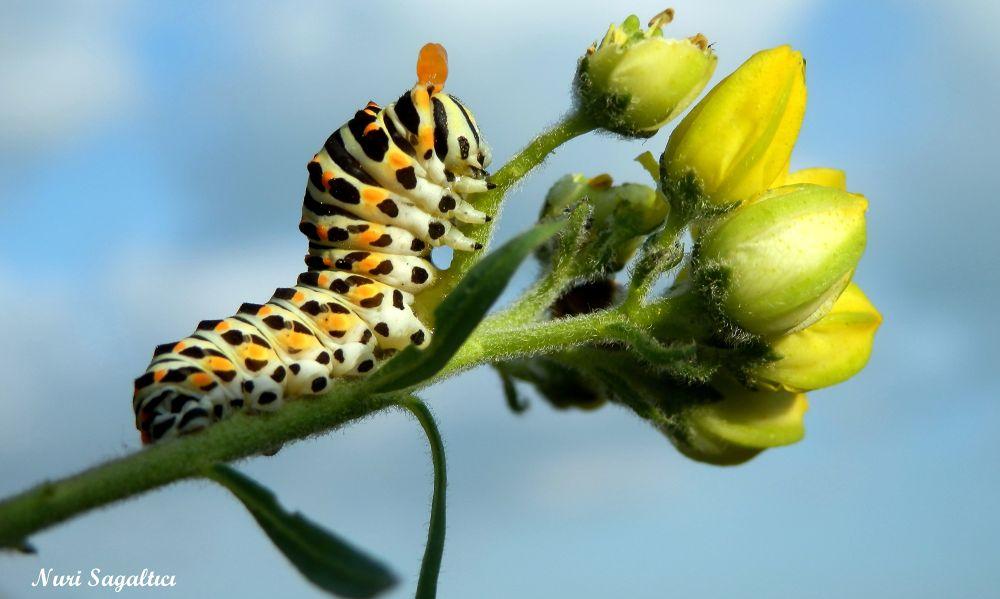 Photo in Random #doğa #nature #macro #makro #animal #kuş #manzara #view