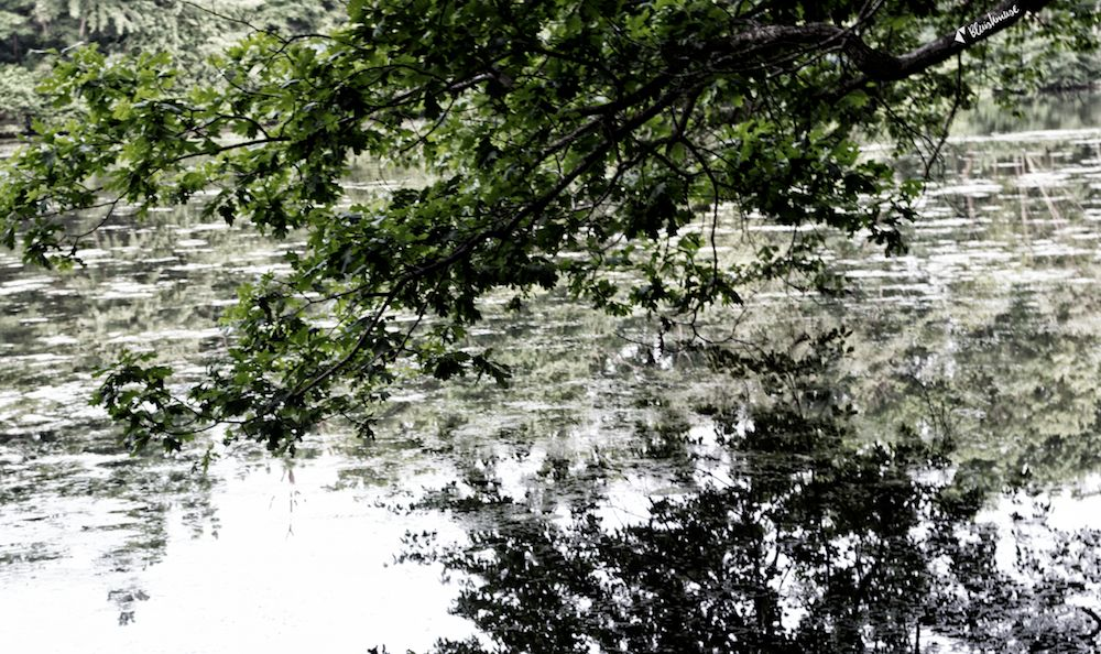 Photo in Nature #reflection #water #tree