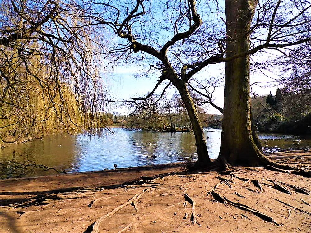 Photo in Landscape #lake #spring #trees #roots #blue sky #water #reflections