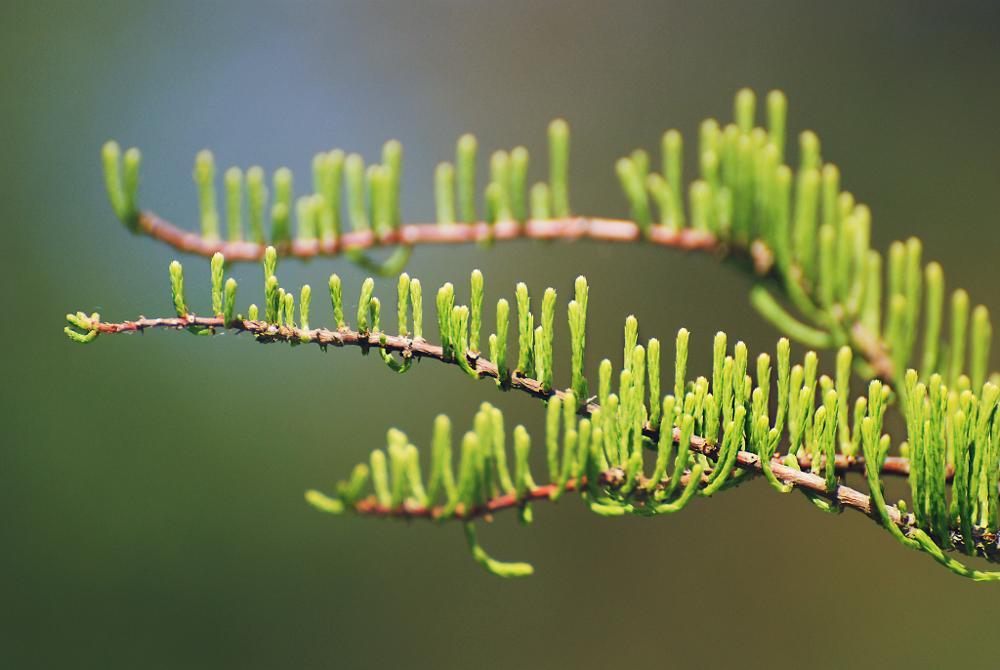 Photo in Nature #gree #plant #botanic #garden