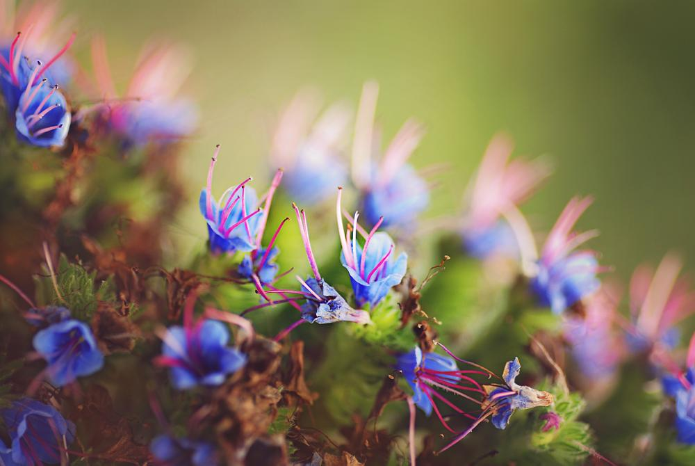 Photo in Nature #flowers #blue #bells #pink