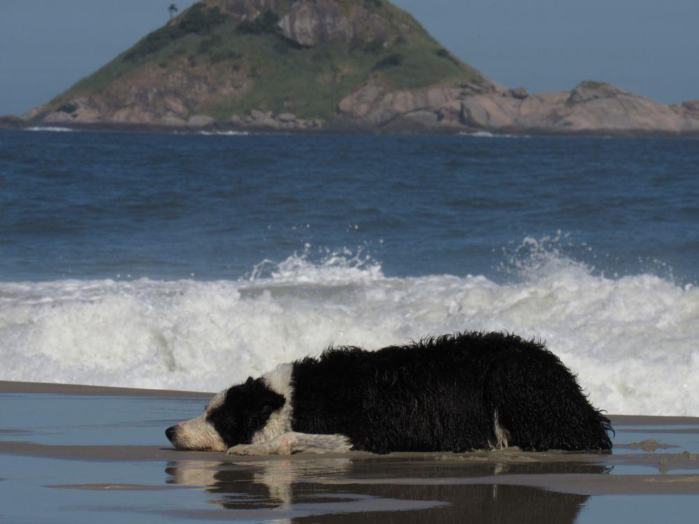 Photo in Animal #sleepy #tired #beach #dog