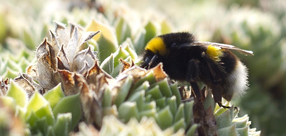 Photo in Macro #nectar #ape #nature #macro #colore #fiore