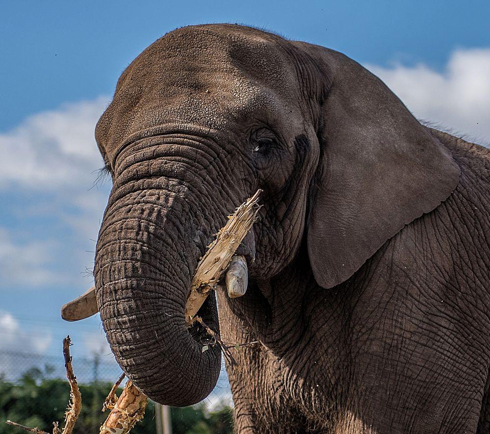 Photo in Animal #elephant