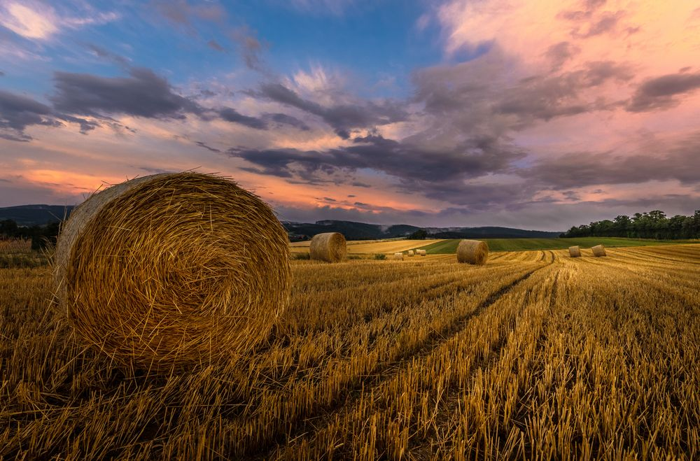 Photo in Landscape #field #canon #eos r5 #landscape #after sunset