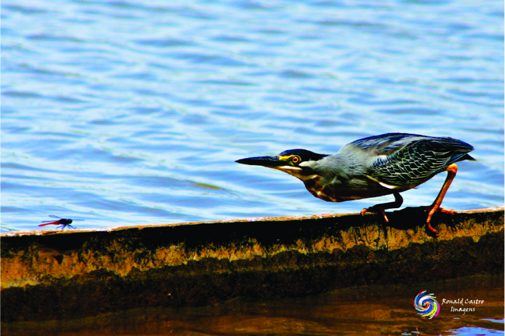Photo in Animal #ronald castro