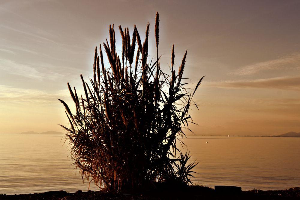 Photo in Nature #sea #nature #silence #balance