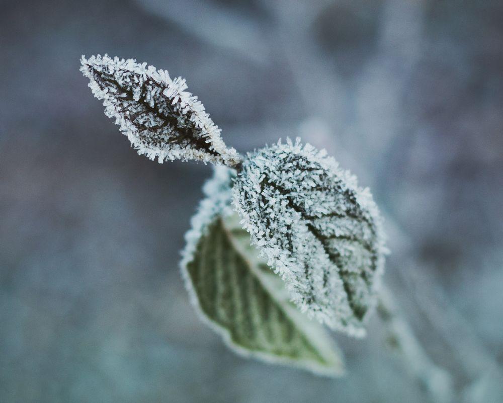Photo in Macro #frost #macro #nature #winter