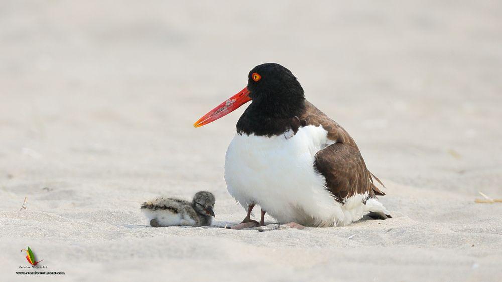 Photo in Nature #creativenatureart #nature #birdphotography #birds