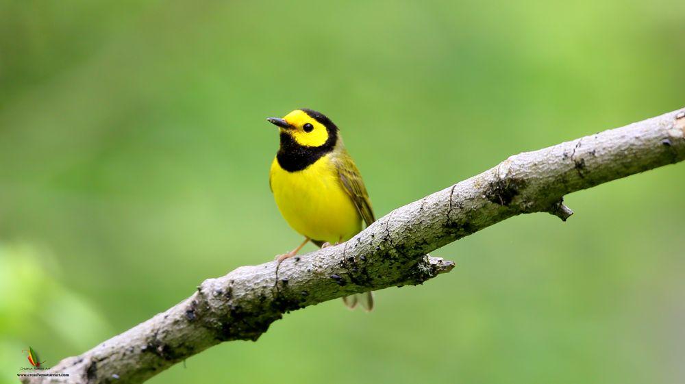Photo in Nature #creativenatureart #birdphotography #birds