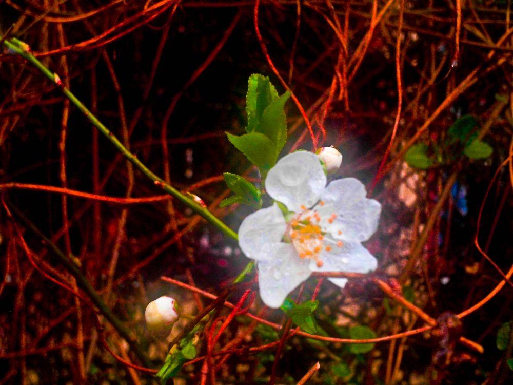 Photo in Macro #flowers #macro #dayphotography