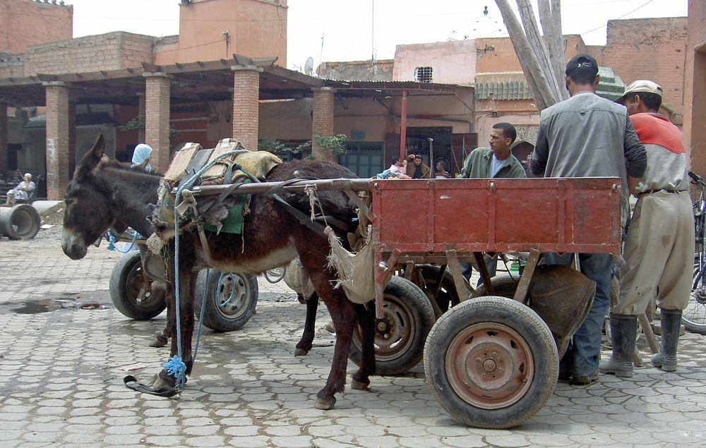 Photo in Street Photography #marrakesh #marrakech #morocco #street-life #donkey #transport