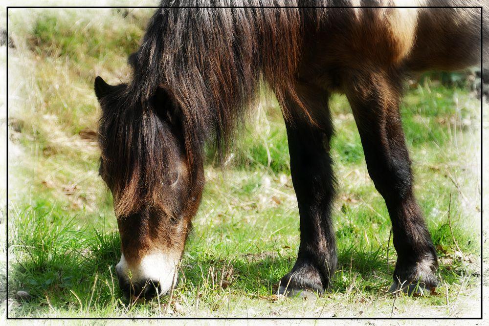 Photo in Animal #wild pony