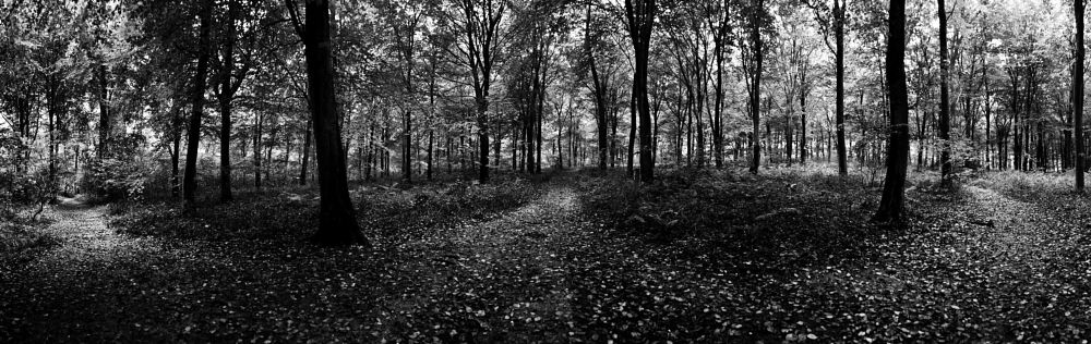 Photo in Landscape #wood #woods #woodland #tree #trees #forest #leaves #path #paths #tracks #walk #branch #branches #mono #monochrome #nature #tony gaitskell