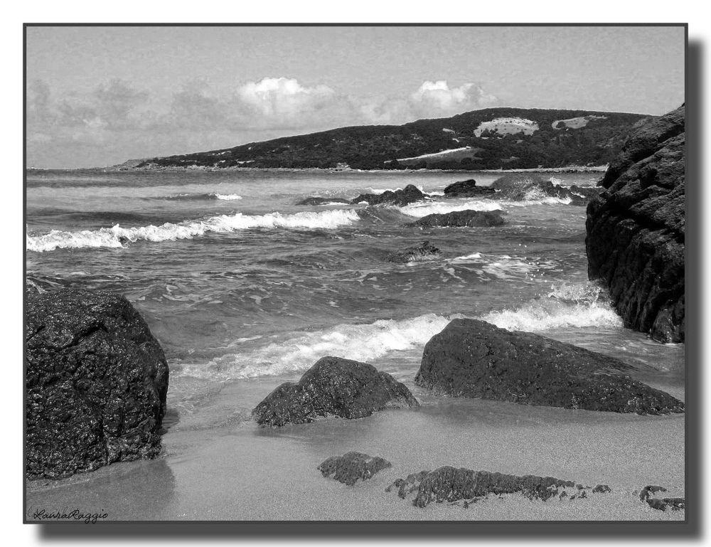 Photo in Black and White #mare