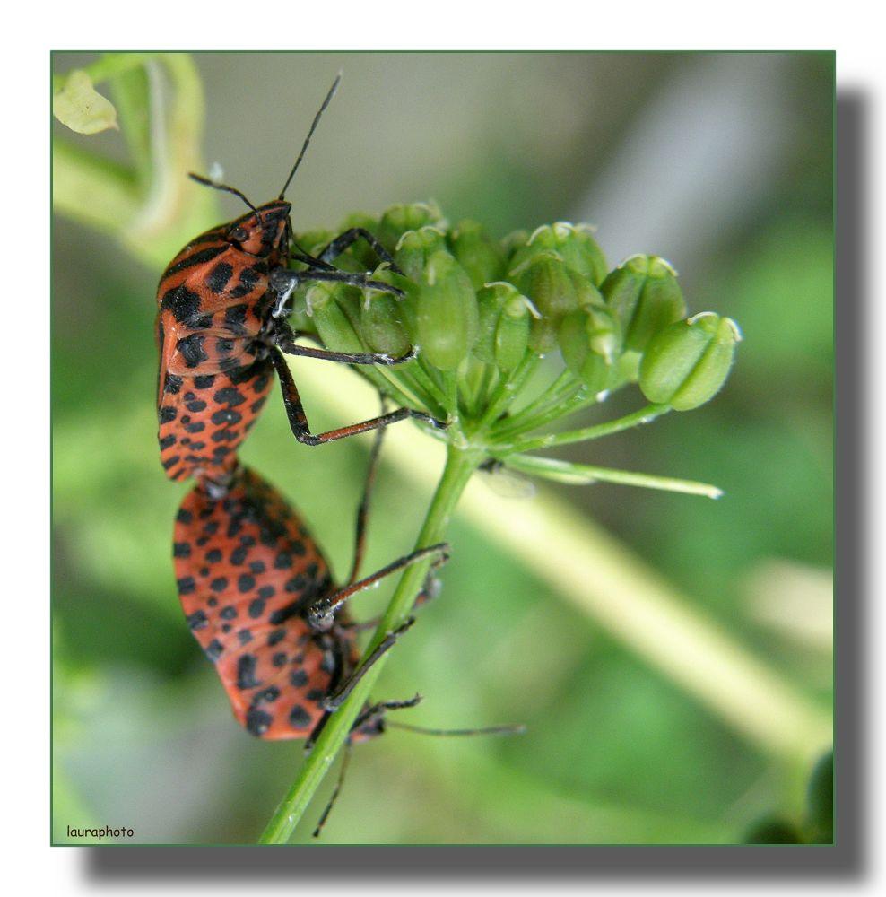 Photo in Macro #insetti