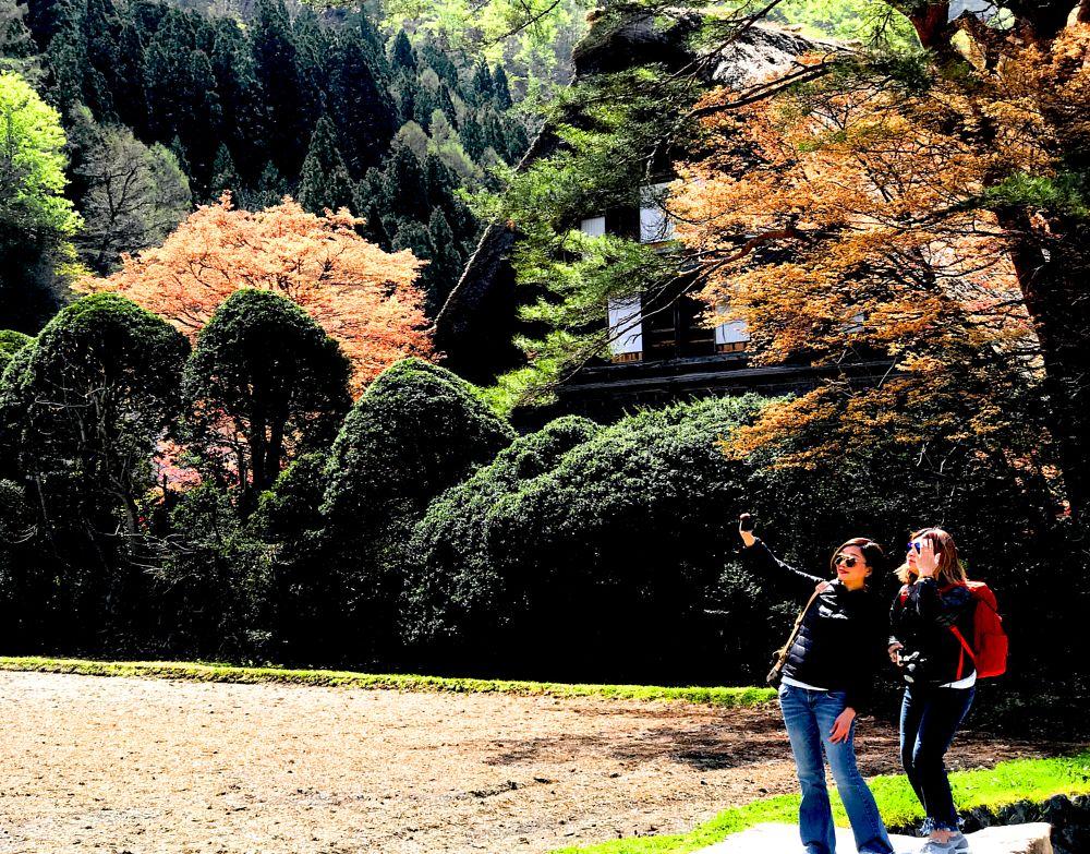 Photo in Random #2017 #japan #trees #shirakawa gifu