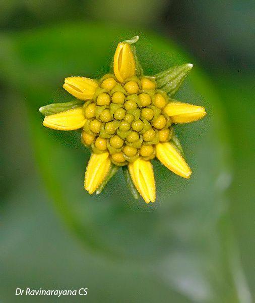 Photo in Random #nature + macro + flower