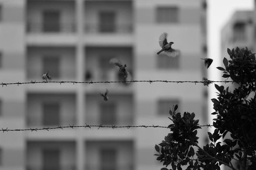 Photo in Animal #freedom