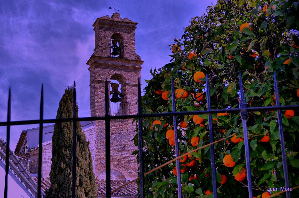 Photo in Random #220 #iglesia #naranjas #verja #cipres
