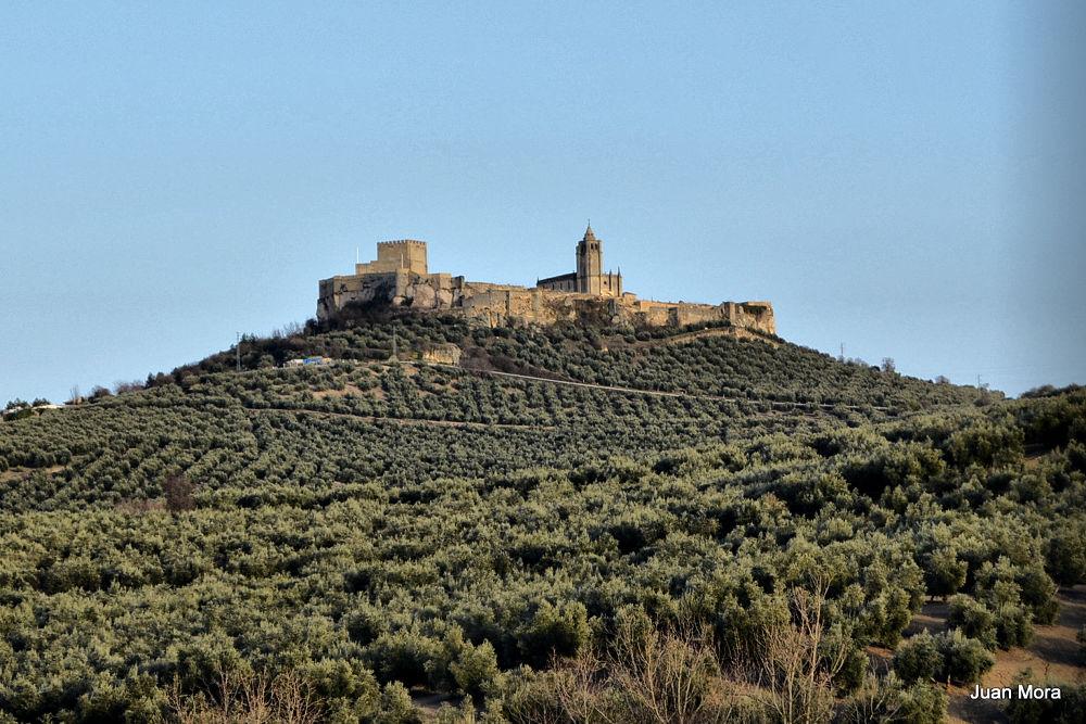 Photo in Landscape #276 #castillo #olivar