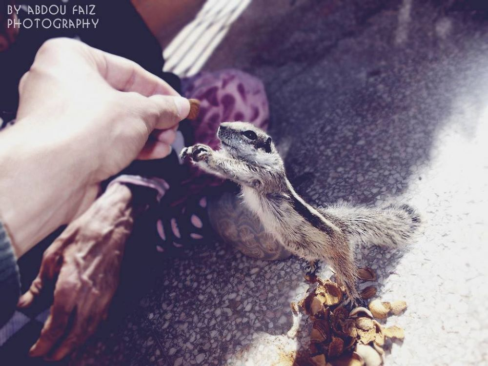 Photo in Random #my  squirrel