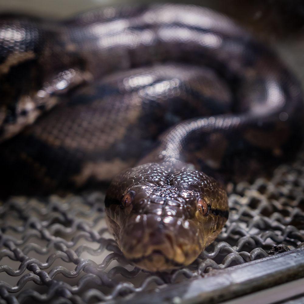 Photo in Animal #snake #animal #reptile