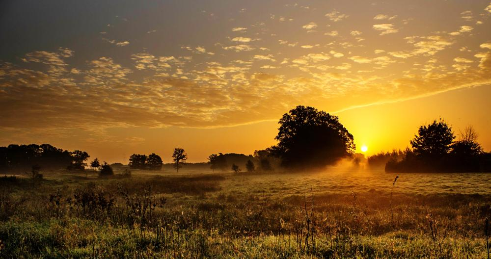 Photo in Landscape #sunrise #afferden #maasduinen #landscape #limburg