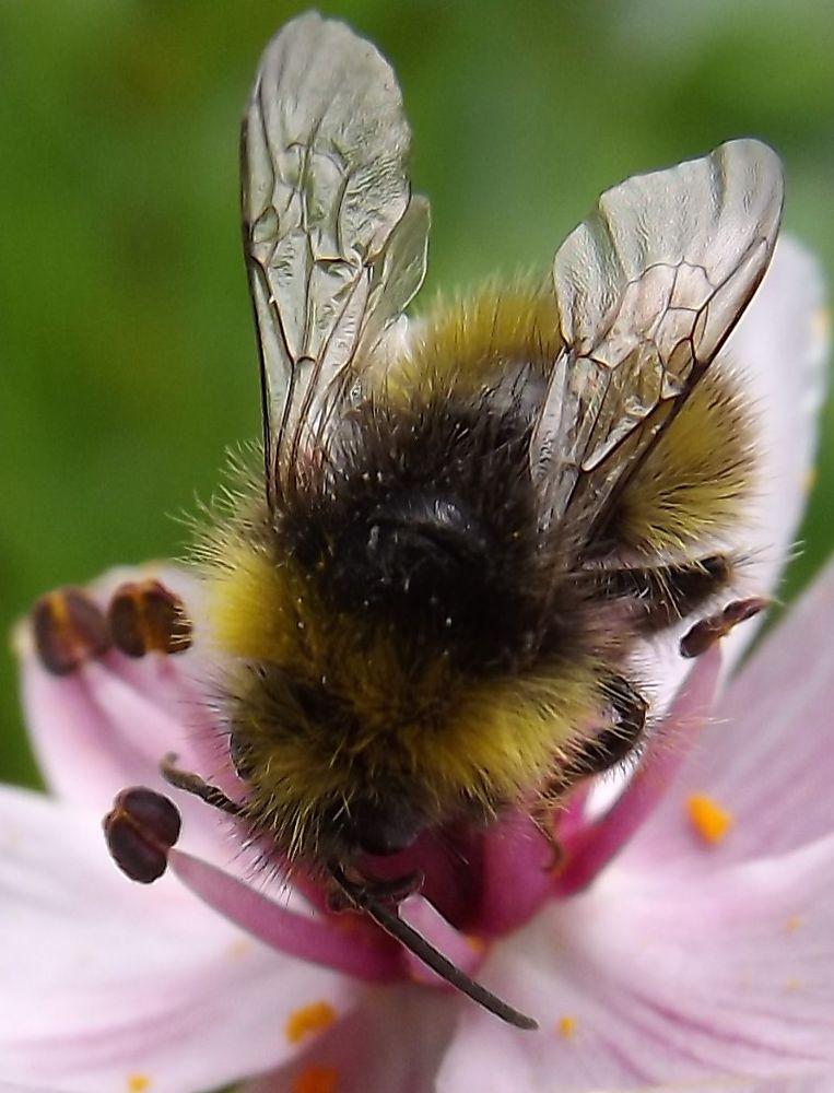 Photo in Nature #bee #macro