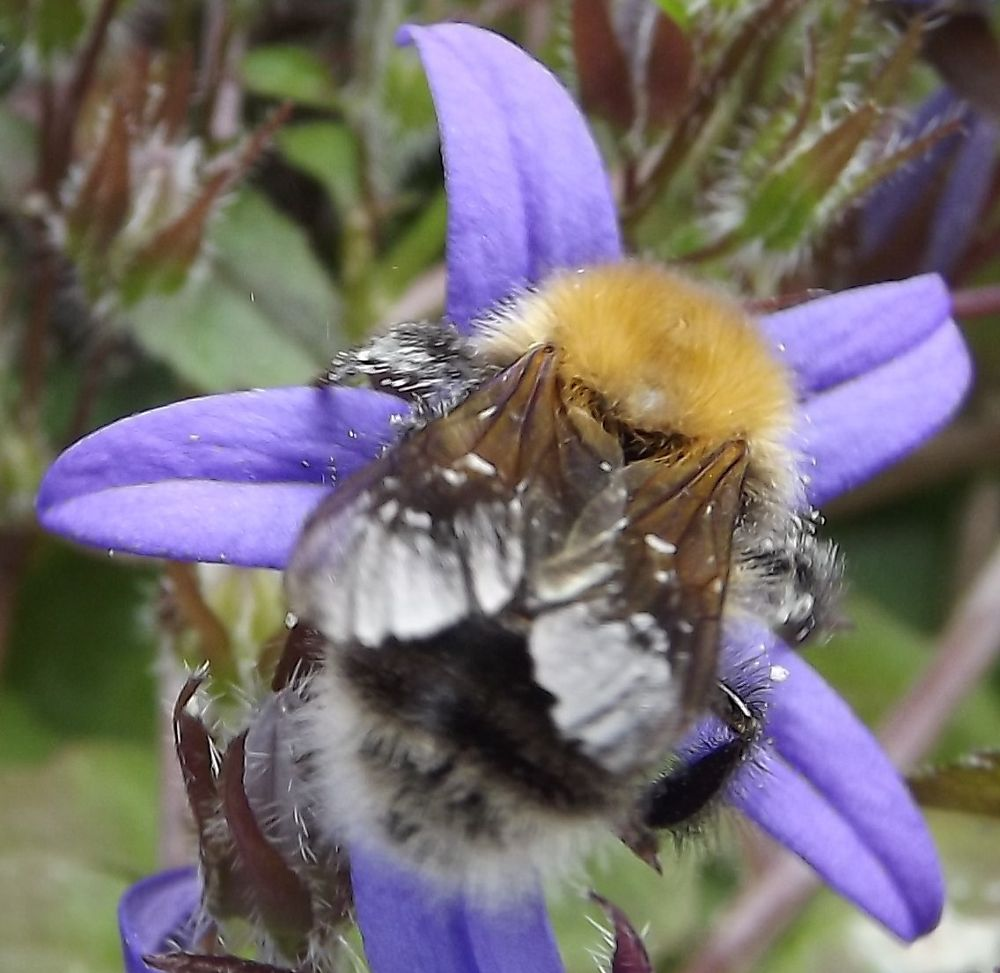 Photo in Macro #bee #purple #macro #nature