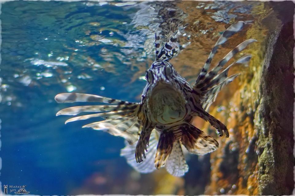 Photo in Underwater #poisson